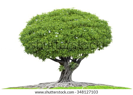 Large tree and roots with green grass meadow concept abundance of natural isolated on white background with clipping path - stock photo