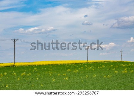 Large view on the powerlines on the large colza field - stock photo