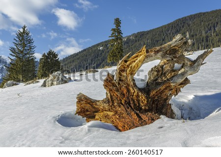 Large weathered dead tree roots stump in a snowy meadow up in the Piatra Craiului mountains, Romania. - stock photo