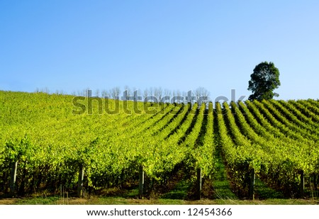 Late afternoon sun baths a scenic vineyard - stock photo