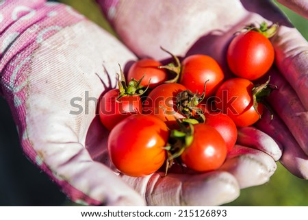Late summer in organic community vegatable garden. - stock photo