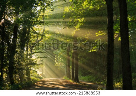 Late summer sunlight breaking through the trees at a mystical lane. - stock photo