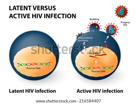 Latent and active HIV infection - stock photo