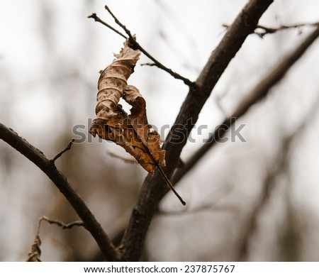 latest leaf on the branch in autumn forest - stock photo