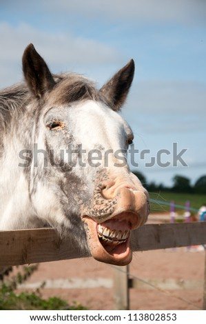 Laughing horse - stock photo