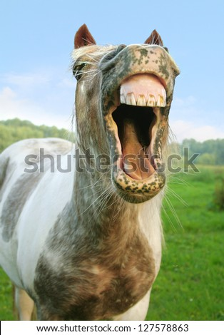 Laughing is healthy - stock photo