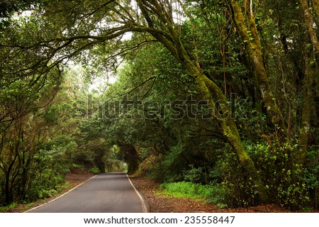 Laurel forest in Canary Islands, Spain, Europe - stock photo