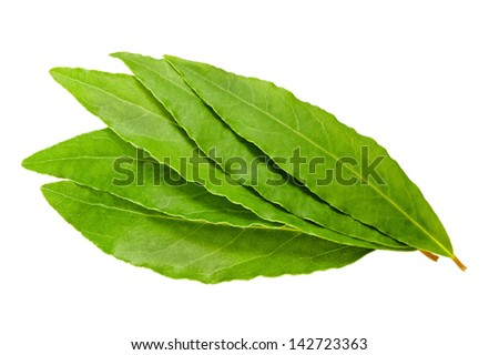 Laurel leaves on white background - stock photo