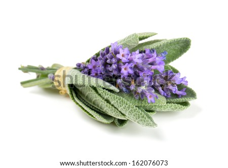 lavender and sage isolated on white - stock photo