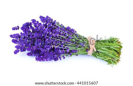 Lavender bouquet isolated on white background - stock photo