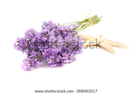Lavender. Bunch of lavender flowers on a white background. Lavender. flower. Lavender bunch. Lavender herb. Lavender and starfish - souvenir from holiday.  - stock photo