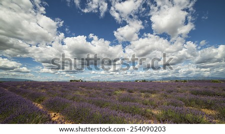 lavender field and cloud - stock photo