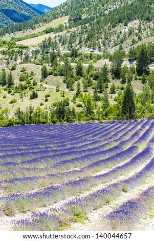 lavender field near Tavard, Rhone-Alpes, France - stock photo