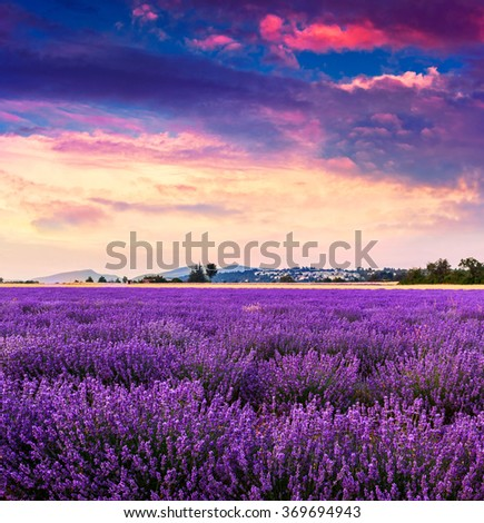 Lavender field summer landscape near Sault.Provence.France - stock photo