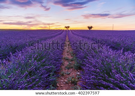 Lavender field summer sunset landscape with two tree near Valensole.Provence,France - stock photo