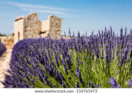 Lavender field with ruins - stock photo