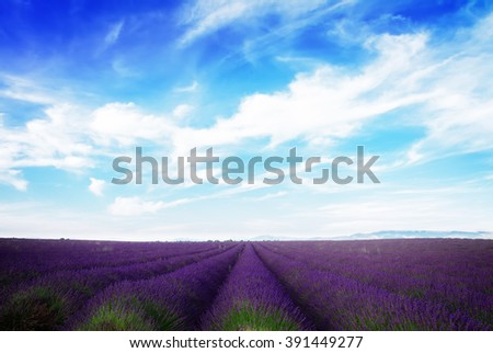 Lavender field with summer blue sky and clouds, France, retro toned - stock photo