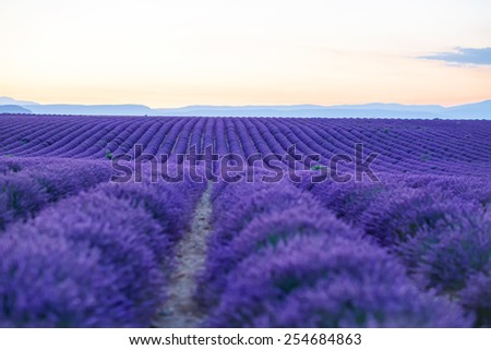 Lavender fields near Valensole in Provence, France on sunset. Beautiful view on rows after sundown. Popular place for traveling and tourists in summer. - stock photo