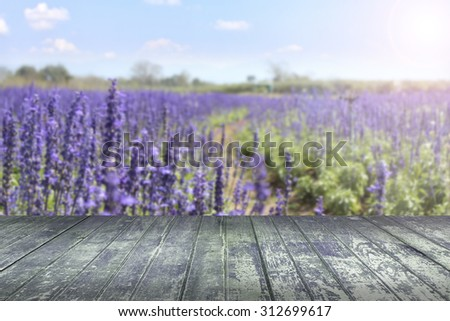 lavender fields with wooden planks floor - stock photo