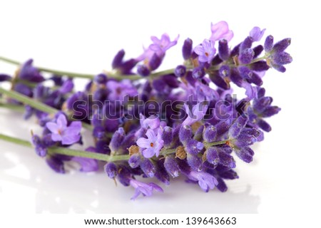 Lavender flower in closeup over white background - stock photo