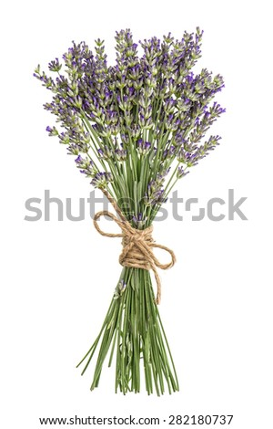 Lavender flowers bunch isolated on white. Fresh provencal plant bouquet - stock photo