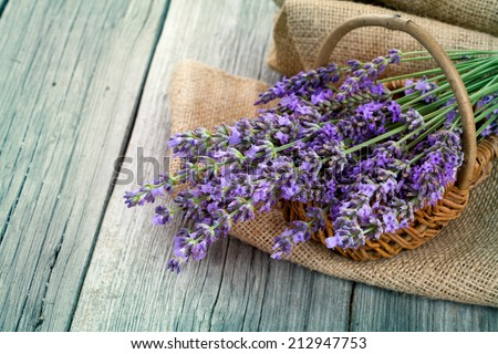 lavender flowers in a basket with burlap on the wooden background - stock photo