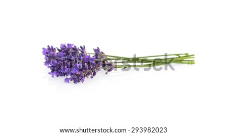Lavender flowers isolated on white - stock photo