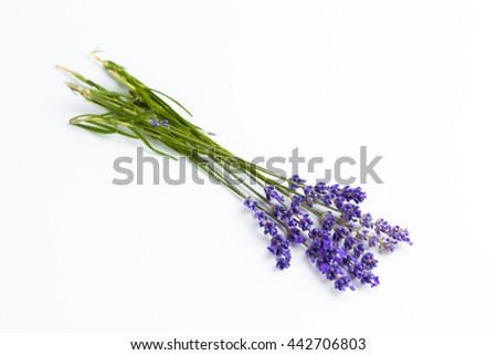 Lavender flowers isolated on white background - stock photo