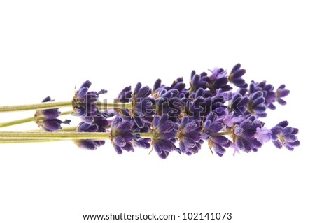 Lavender flowers on the white background - stock photo