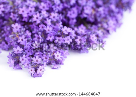Lavender flowers on white background. Copy space. Macro shot - stock photo