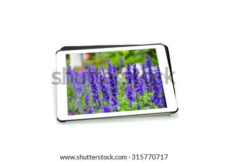 lavender flowers purple  in tablet on white background (take a photo from myself  send to shutterstock  approved Image ID: 177157808) - stock photo