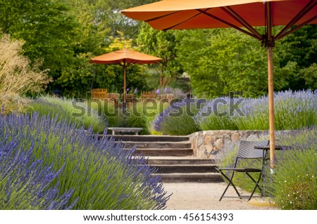 Lavender garden with outdoor sitting area, focus in on the foreground - stock photo