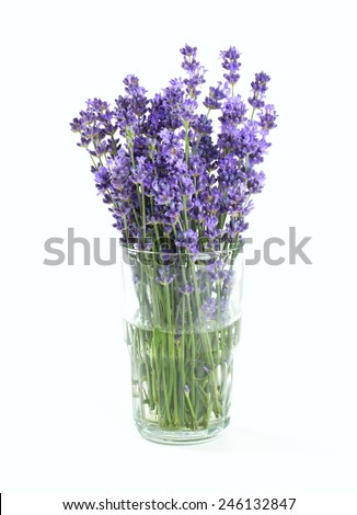 lavender in a glass isolated on white - stock photo