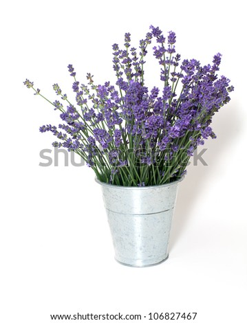 lavender in bucket isolated on white background - stock photo