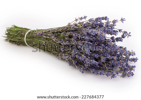 lavender isolated on white background - stock photo
