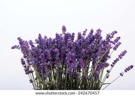 Lavender isolated on white background. Close up  - stock photo