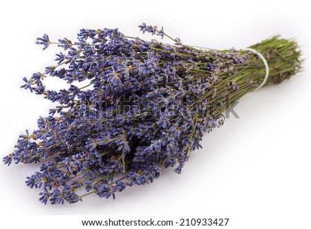 lavender on white background - stock photo