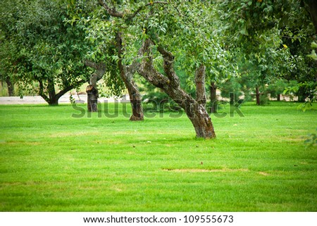 lawn,  and beautiful apple-trees - stock photo