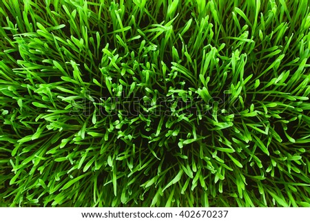 Lawn grass top view - stock photo