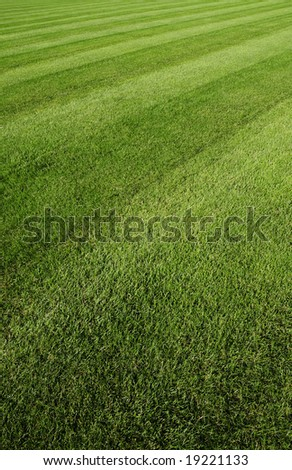lawn ground - stock photo