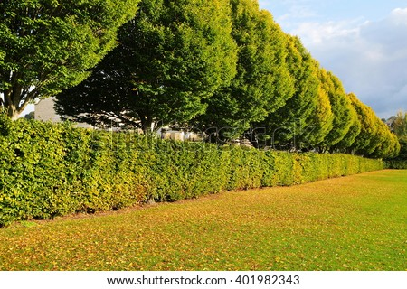 Lawn in a Landscaped City Park with a Line of Trees and Hedgerow - stock photo