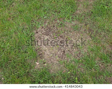 Lawn repairing by overseeding grass on places damaged by mole hills.        - stock photo
