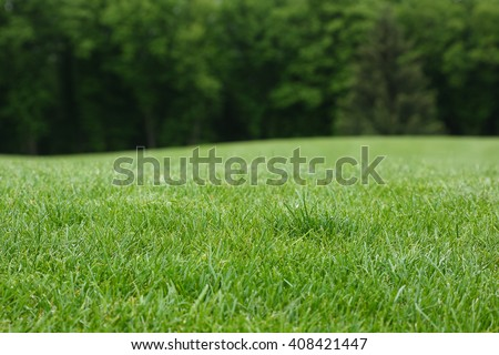 Lawn with green grass. Field of grass and background of line trees at a defocus. - stock photo