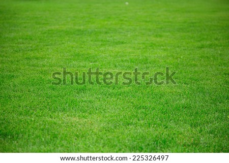 Lawn with green grass. Green grass for background. - stock photo