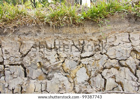 Layer of soil beneath - stock photo