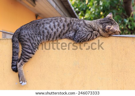 Lazy cat - stock photo