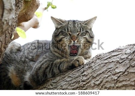 Lazy cat in a tree, with open mouth - stock photo