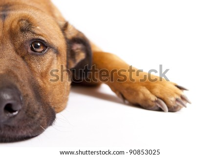 Lazy dog - stock photo