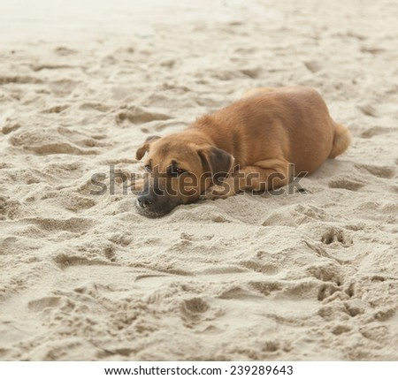 lazy dog relaxing and sleeping on sand beach - stock photo