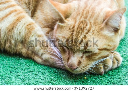 lazy orange cat on green capet - stock photo